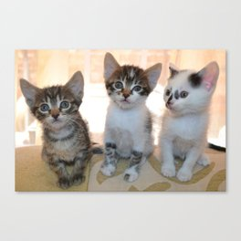 Funny kittens Canvas Print