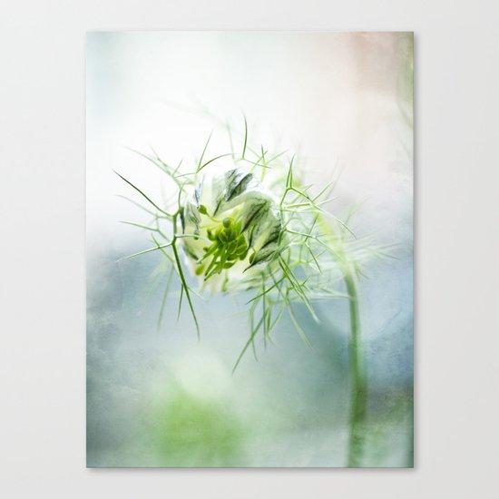 Nigella, Tarhaneidonkukka Canvas Print