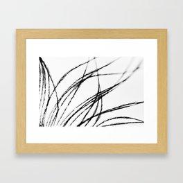Plume- A Feather Study 3 Framed Art Print