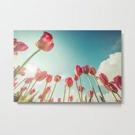 Pink Tulips From Below Metal Print