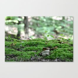 Forest Moss Canvas Print