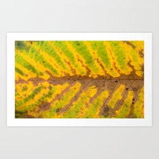 autumn leaf texture Art Print