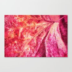 leaf and waterdrops Canvas Print