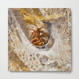 Talbert Spider  Metal Print