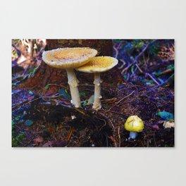 Fungi on Vancouver Island, BC Canvas Print