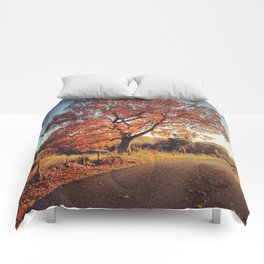 White Oak Road - Fall Comforters