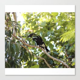 The Currawongs are Coming Canvas Print