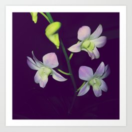 National Flower Art Print