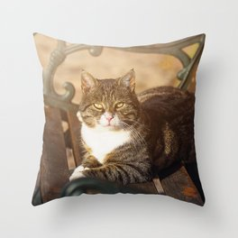 Cute cat relaxing in the sun on old bench Throw Pillow