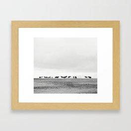 Black and White Horses in Landscape Photograph, Iceland Framed Art Print