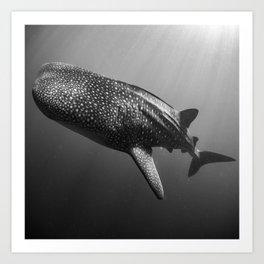 Whale shark black white Art Print