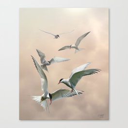 Terns' Breakfast  Canvas Print
