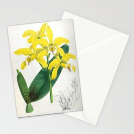 Laelia Xanthina Vintage Yellow Lindenia Orchid Stationery Cards