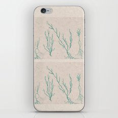 Plants in a Line iPhone & iPod Skin