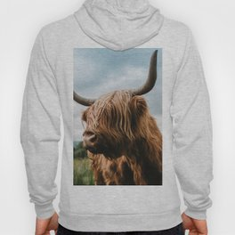 Scottish Highland Cattle - Animal Photography Hoody