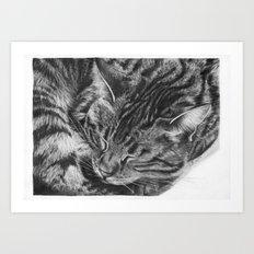 Ziggy the Tabby Cat Art Print
