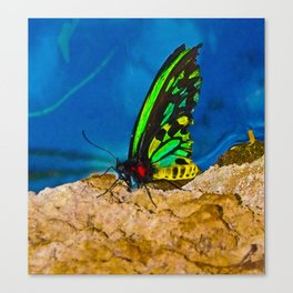 Black and Green Butterfly Canvas Print