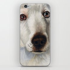 Maremma dog iPhone & iPod Skin