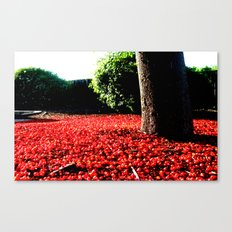 Cherry coloured Leaves Canvas Print