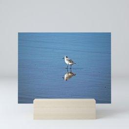 Sandpiper Coastal Bird Beach Seashore Mini Art Print