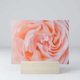 Closeup - Rose Photography Mini Art Print