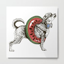 Summer chihuahua dog Metal Print