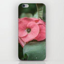 Corona de Cristo - Flower Photography iPhone Skin
