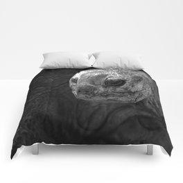 Aldabra Giant Tortoise Comforters