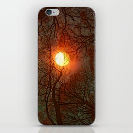 Sun and Trees and Trees and Sun iPhone Skin
