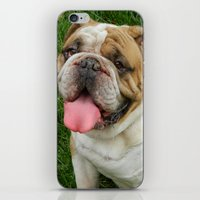 boxer iPhone & iPod Skins featuring Boxer by Tbuddsy