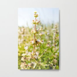 Nature photography White grass flower I Metal Print