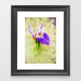 Iris (2) Framed Art Print