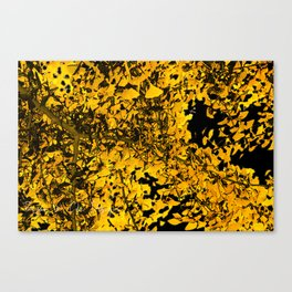 Ginko Leaves In California Canvas Print