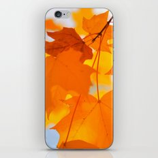 Yellow-orange Autumn iPhone & iPod Skin