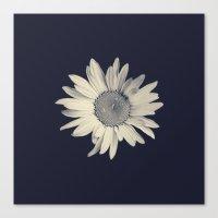 daisy Canvas Prints featuring Daisy  by Marianne LoMonaco