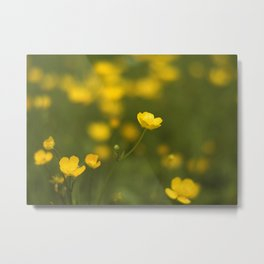 Warm buttercups Metal Print