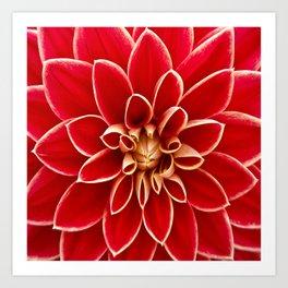 Red Dahila Art Print