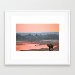 Walk in the evening light, Africa wildlife Framed Art Print