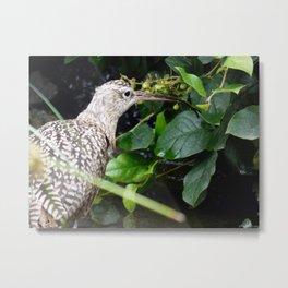 Long-Billed Curlew Metal Print