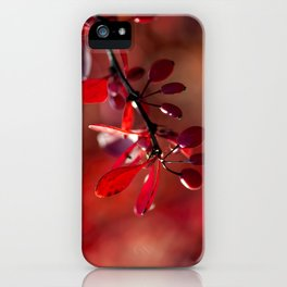 FIRE - Indian Summer VII iPhone Case