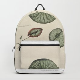 Vintage front piece of a young gigantic water lily (Victoria Regia) Backpack