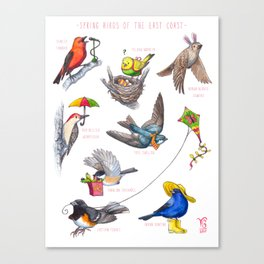 Spring Birds of the East Coast Canvas Print