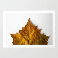 Autumn Leaf - Yellow Art Print