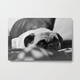 Ruby Rose the pug, having a bad day Metal Print