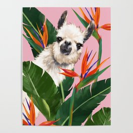 Llama in Bird of Paradise Flowers Poster