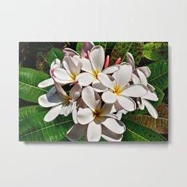 Beautiful Tropical Plumeria Frangipani Flowers Metal Print