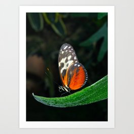 Grace of a Butterfly  Art Print