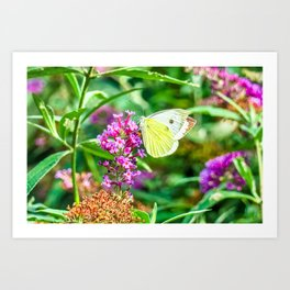 Cabbage White Butterfly Art Print