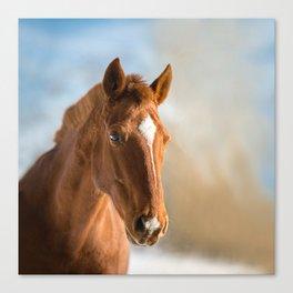 Brown Horse Winter Sky Canvas Print
