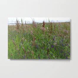 Scottish Meadow Metal Print